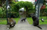 What age can cats go outside