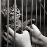 Click here for Free Cat adoption Classifieds