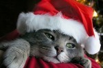 I wantz also a gift from zanta!