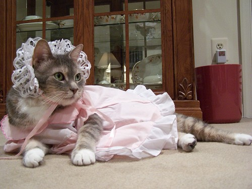 cat-costume-maid.jpg ... & Index of /wp-content/uploads/2010/02/23/cute-and-funny-cats-in-cat ...