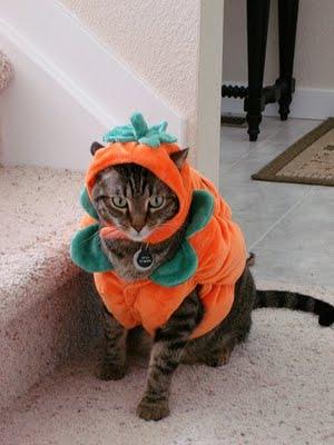 catincostume4 - Funny Cat Halloween