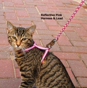 Unhappy Tabby Cat on Leash