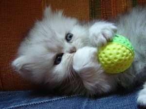 Cute Fluffy Kitten Playing with a Ball