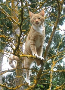 Tabby Outdoor Ginger climbing trees