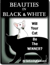Cat Beauties in Black and White - cat photo contest and book for black and white cats