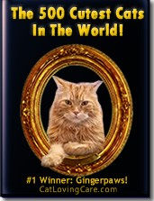 Cutest Cats in The World- cat photo contest and book
