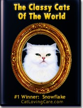 Classy Cats of The World- Pedigree Cat Book & Cover Cat Photo Contest